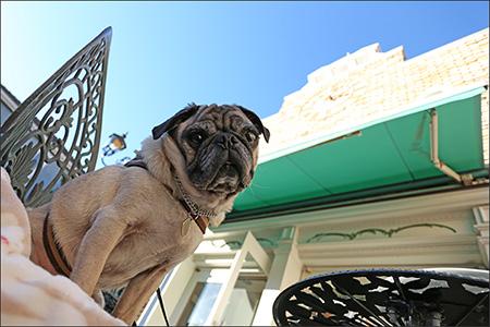 ロジアス自由が丘店でランチしました。