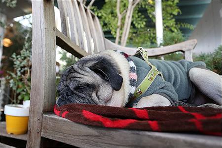 ぐーぐー寝るオリビア。顔が熱くなっていました。(笑)