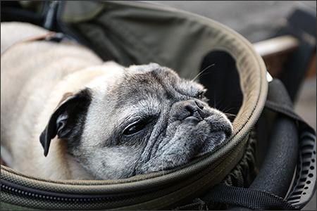 カートにうずくまって、魚顔で寝てしまいました…。