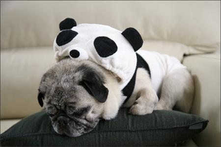 パンダの夢を見るオリビア。