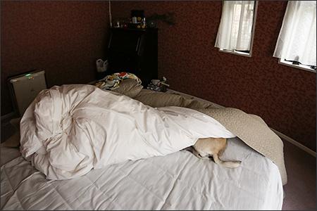 布団に頭を突っ込んで、なかなか起きて来ないオリー。