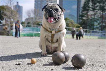 ペタンクの球とオリビア、小さい球はビュット