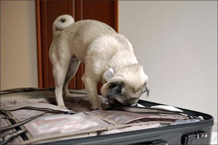 執拗に荷物をクンクンしています。