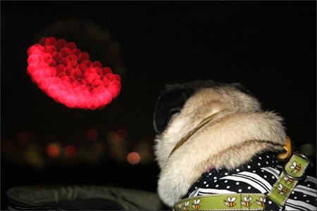 中途半端な花火に見入るオリビア。