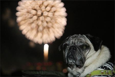 折角なので、ちゃんと花火を観ましょう。