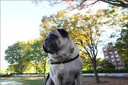 紅葉にはまだちょっと早い駒沢公園