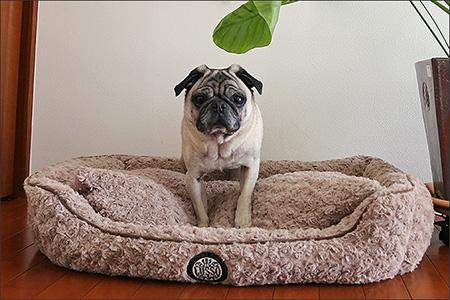 落ち着いたデザインのベッドは意外と少ないのです。