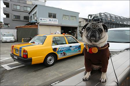 久しぶりに思い出の鳩タクシーにやって来ました。