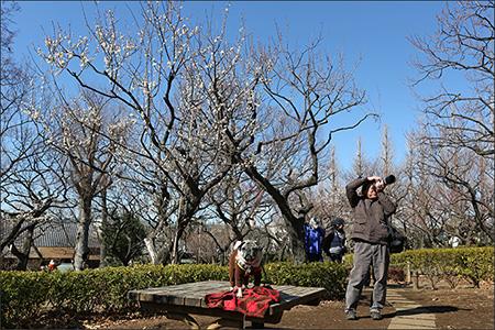 梅園にはアマチュアカメラマンがいっぱいです。