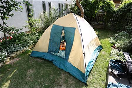 庭にテントを張ってみました。