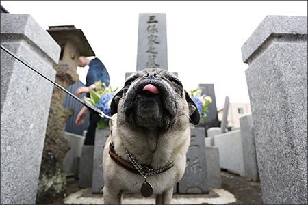 御親戚のお墓にもご挨拶しておきました。
