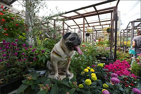 特等席に座って、花に囲まれるオリビアさん。