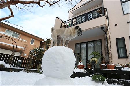 大雪が降ったので雪だるまを作ってみました。