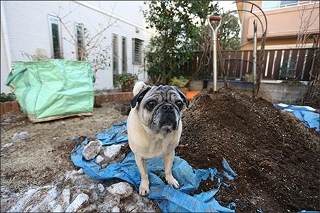 庭の木を抜きに、植木屋さんがやって来ました。