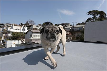 オリビアは家の屋上で日向ぼっこしました。