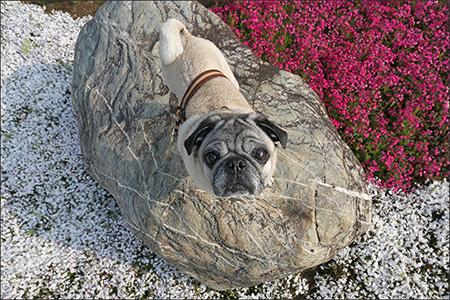 ちょうど頃合いの岩があったので、今回は上からのアングルで♪