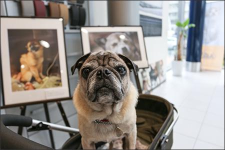 オリーはARKの写真展を見に行きました。
