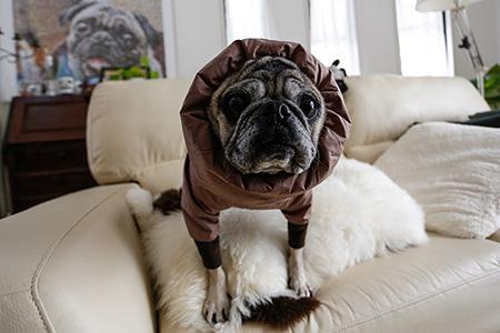 オリビアは新しい防寒着を買ってもらいました。