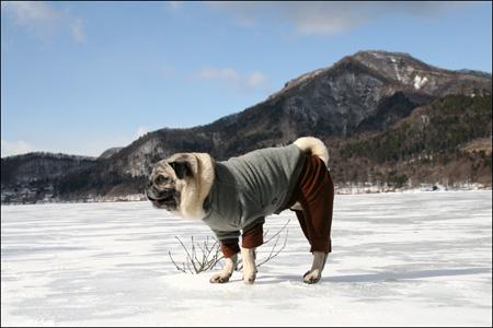 凍結した榛名湖を散歩するオリビア