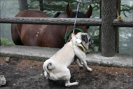 5合目で馬とお近づきになりました。
