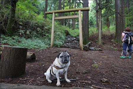 大岳山荘(廃虚)にはトイレがあるのですが怖くて使えません…。