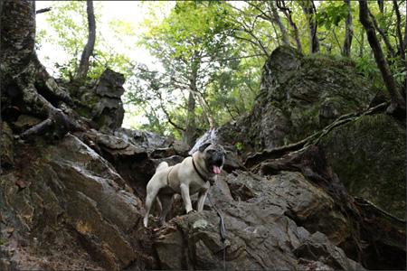 無理っぽい岩場も器用に登るオリビア。