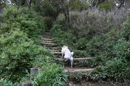ヤビツ峠から階段を登ってイタツミ尾根へ。