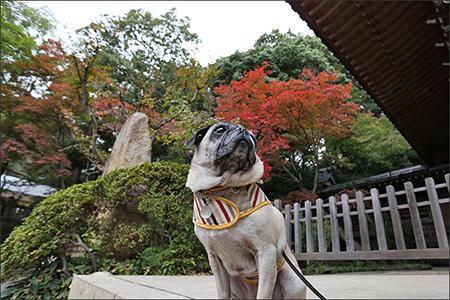 寺社と色付いた紅葉が絵になります。