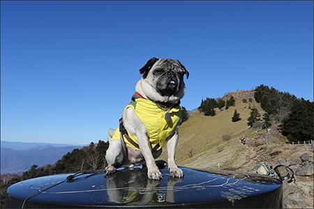 大菩薩嶺に登りました。