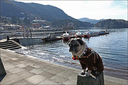 次回はオリーとスワンに乗って芦ノ湖めぐりをしようかな…。