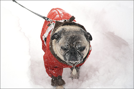 やたらくっついて歩くので、顔が雪まみれに…
