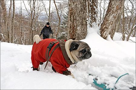 麓からスノーシューで登る物好きは他にいないようです。