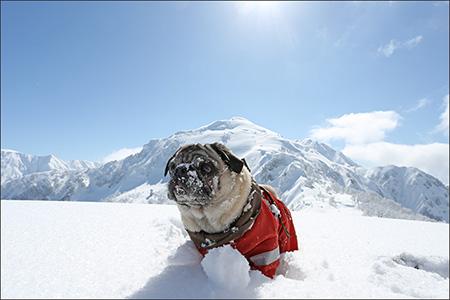 オリーが雪まみれなのは、新雪に放り投げたから。(笑)