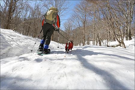 冬場は沢の上のルートを歩けるので楽ちんです。