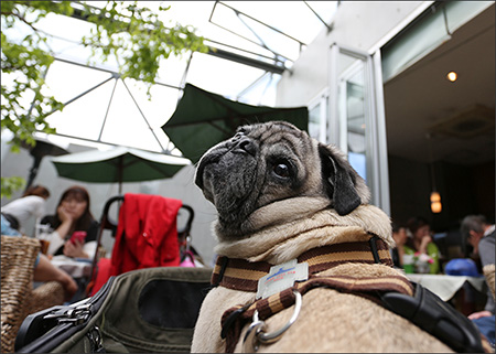 奥まった所にある、犬OKのカフェ「キラク(kiraku)」