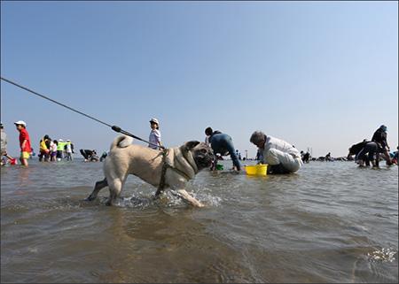 富津海岸に潮干狩りに行きました。