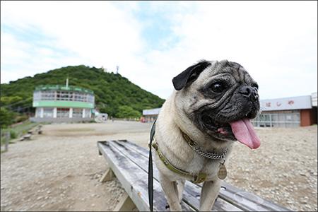 筑波山の鞍部は砂利の広場になっています。
