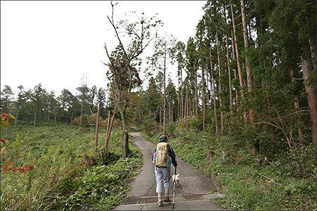 日影沢林道に合流。すぐ先の電波塔が頂上です。
