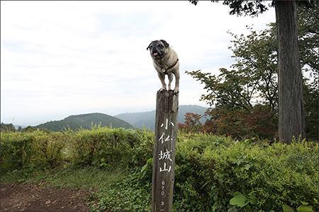 山頂に到着!高尾山(599m)より70m以上も高かったのですね。