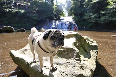 滝の周りでは子供が水遊びをして、気持ちよさげです。