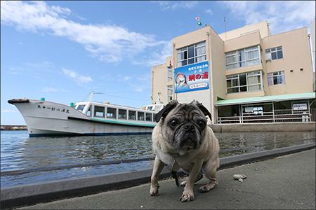 オリーは鯛の浦の遊覧船に乗りました。