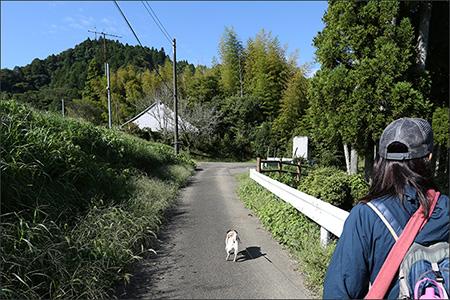 駐車場からてくてく養老渓谷へ向かいます。