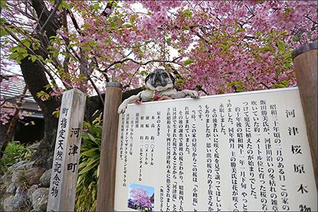 飯田さんの家はこの季節はとっても賑やかなのです。