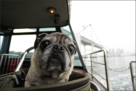 水上バスから眺めるレインボーブリッジは大迫力です♪