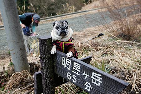 宮城野から明星ヶ岳~明神ヶ岳へ登りました。