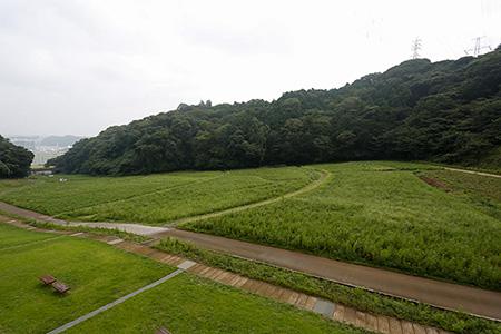一面緑のコスモス畑。オリーは肩車されて真ん中あたりに。。