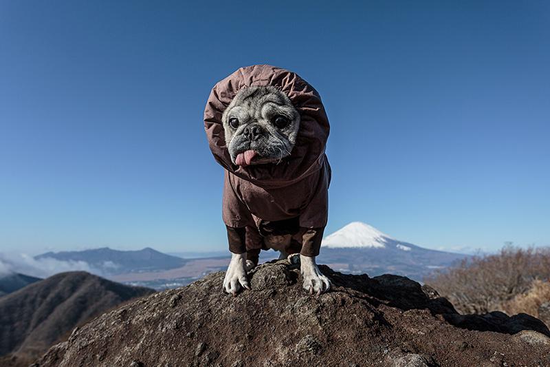 大晦日に金時山に登りました。